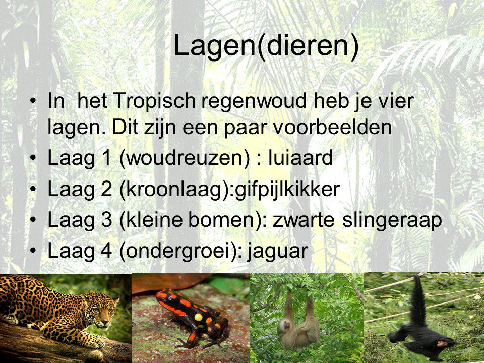 Lagen(dieren) In het Tropisch regenwoud heb je vier lagen. Dit zijn een paar voorbeelden. Laag 1 (woudreuzen) : luiaard.