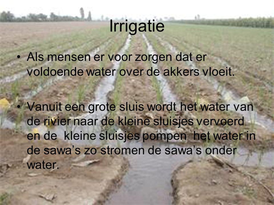 Irrigatie Als mensen er voor zorgen dat er voldoende water over de akkers vloeit.