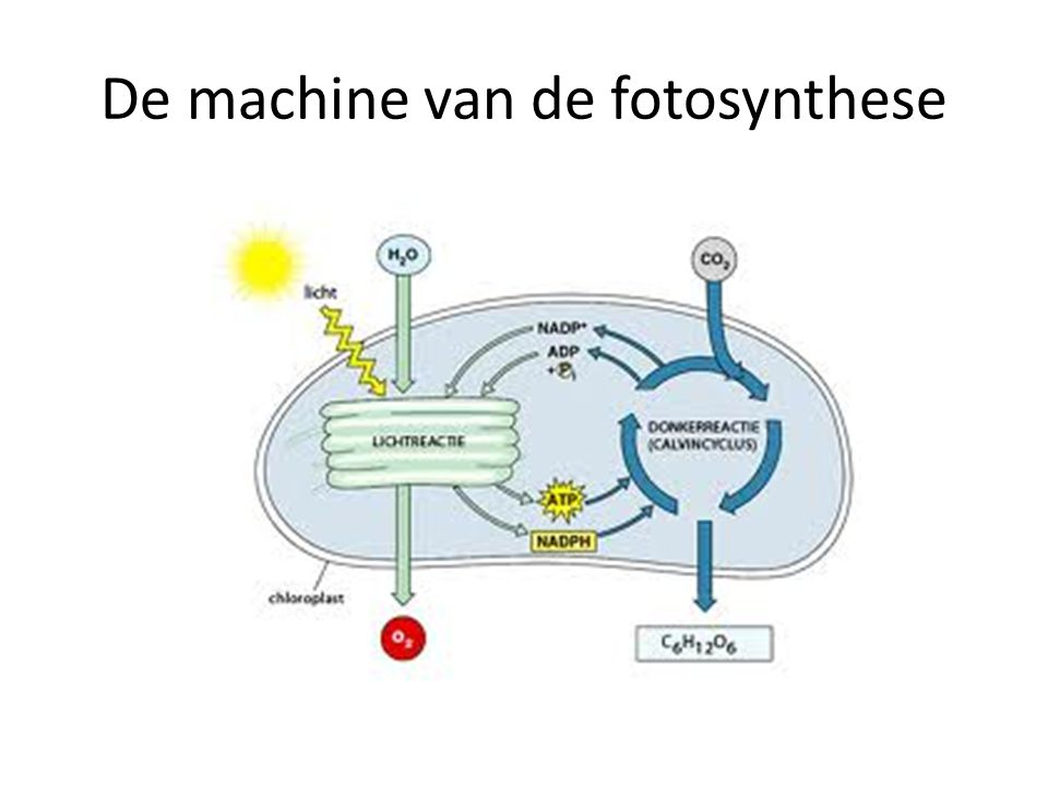 De machine van de fotosynthese