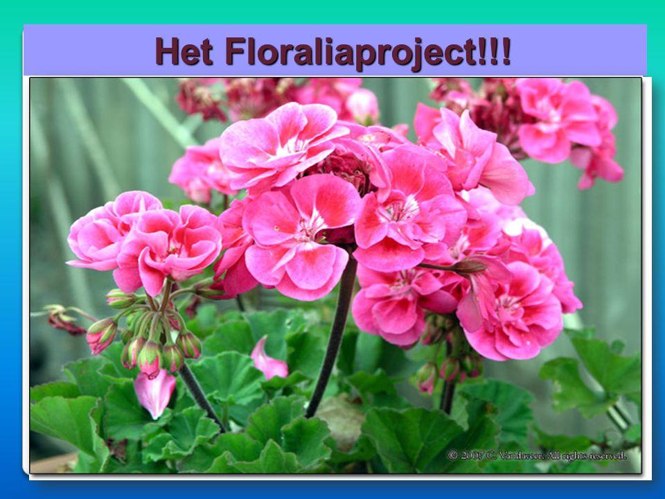 Het Floraliaproject!!!
