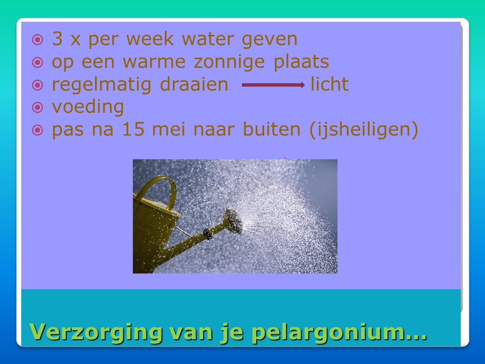 Verzorging van je pelargonium…