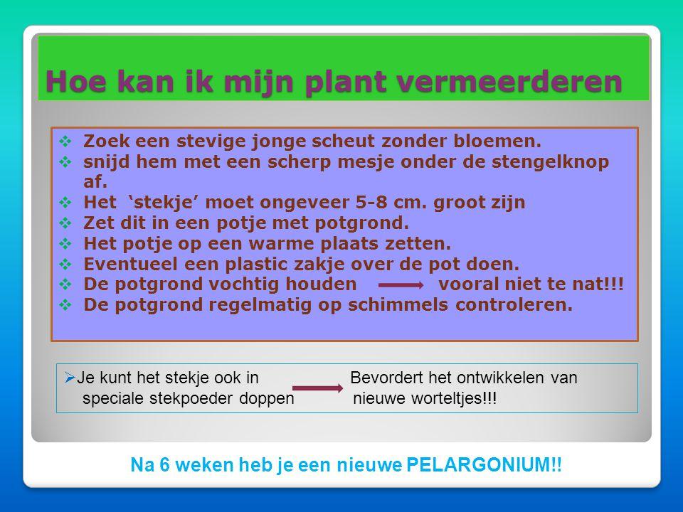 Hoe kan ik mijn plant vermeerderen