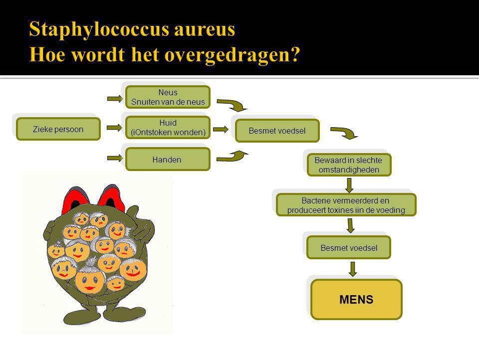 Staphylococcus aureus Hoe wordt het overgedragen