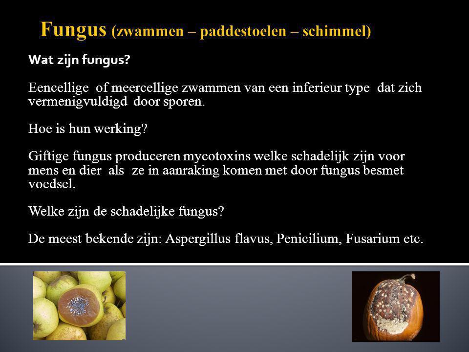 Fungus (zwammen – paddestoelen – schimmel)