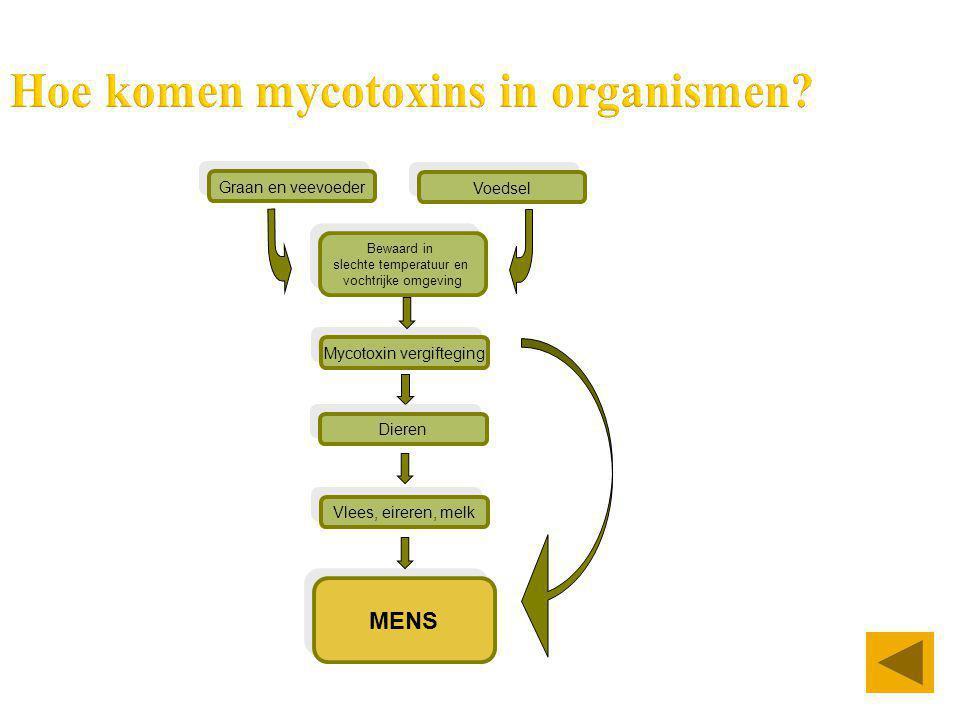 Hoe komen mycotoxins in organismen