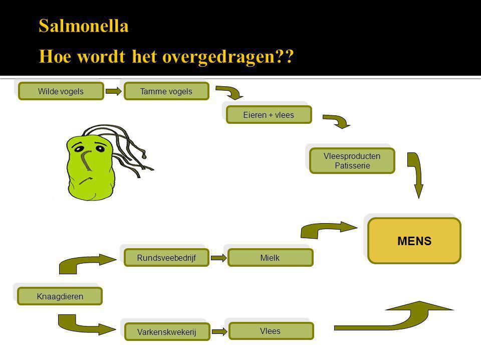Salmonella Hoe wordt het overgedragen