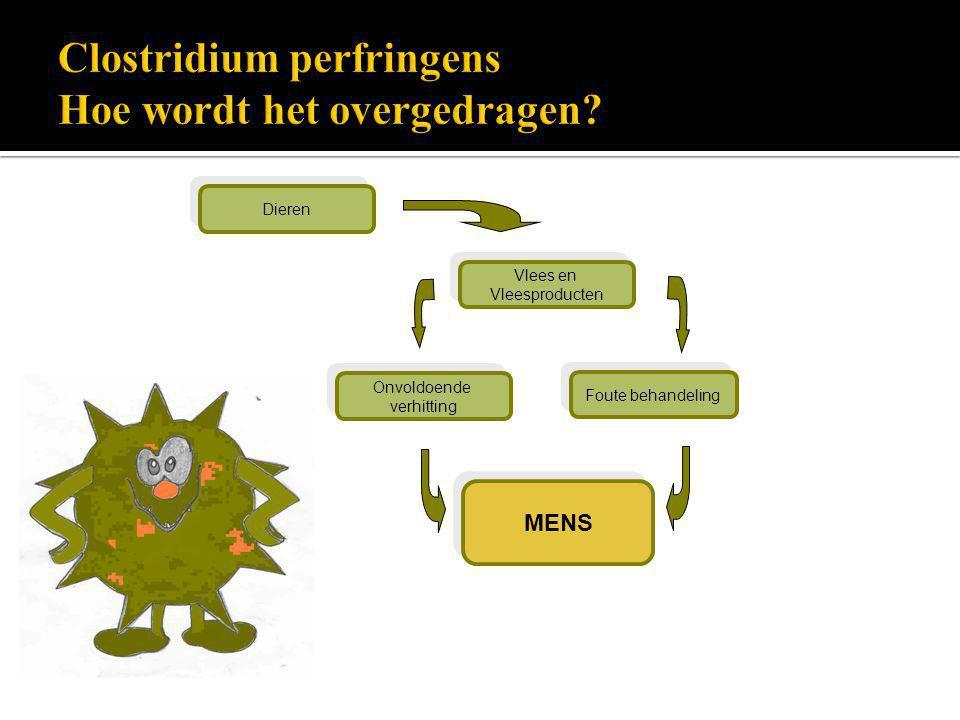 Clostridium perfringens Hoe wordt het overgedragen