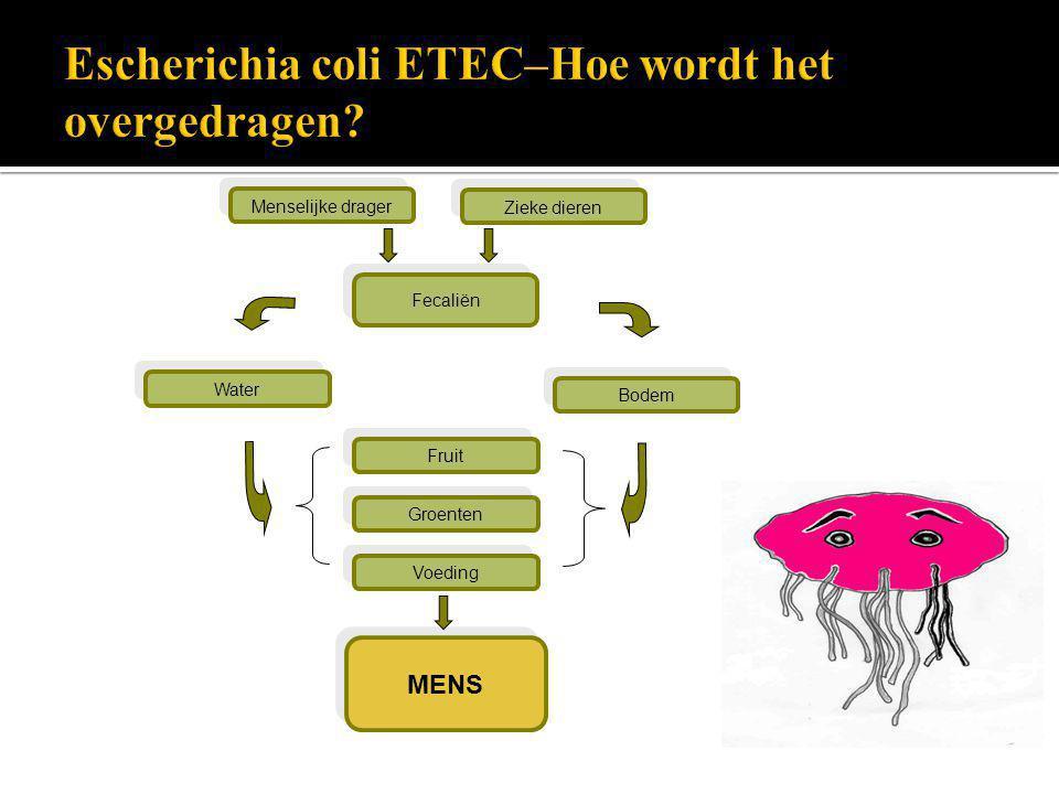 Escherichia coli ETEC–Hoe wordt het overgedragen