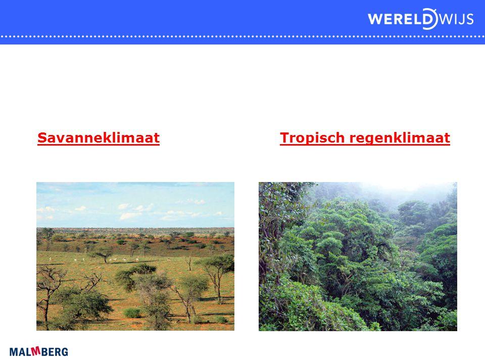 Savanneklimaat Tropisch regenklimaat