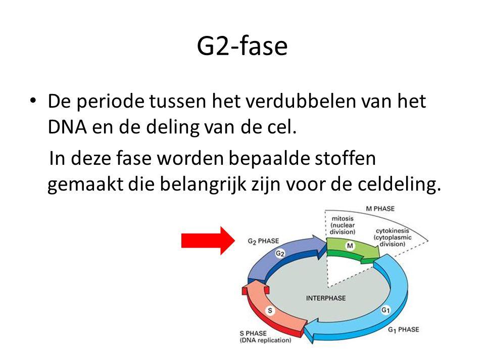 G2-fase De periode tussen het verdubbelen van het DNA en de deling van de cel.