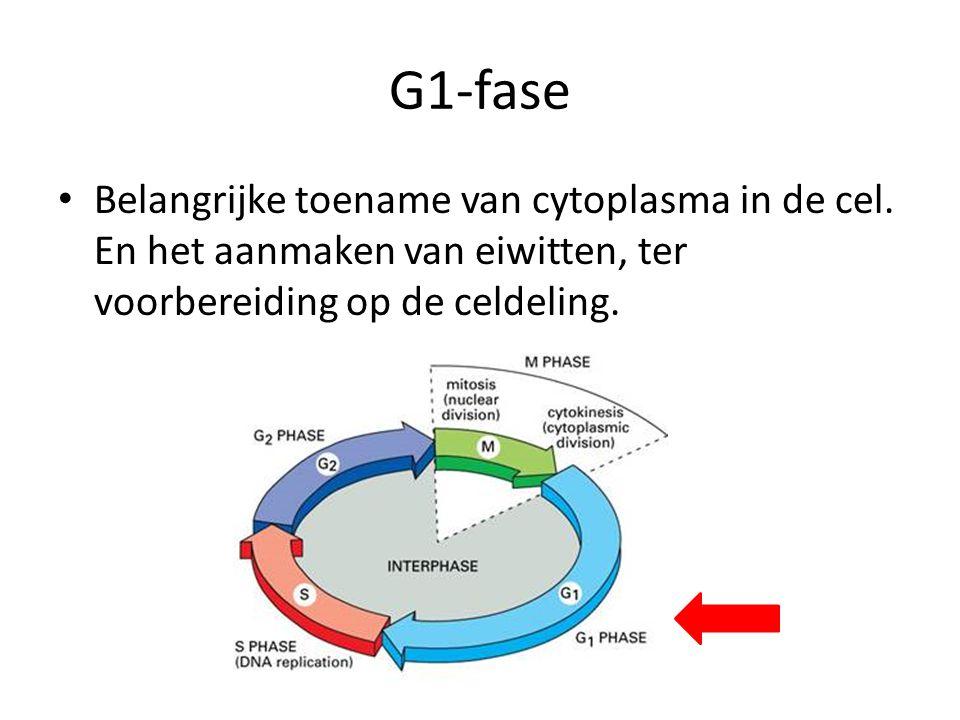 G1-fase Belangrijke toename van cytoplasma in de cel.
