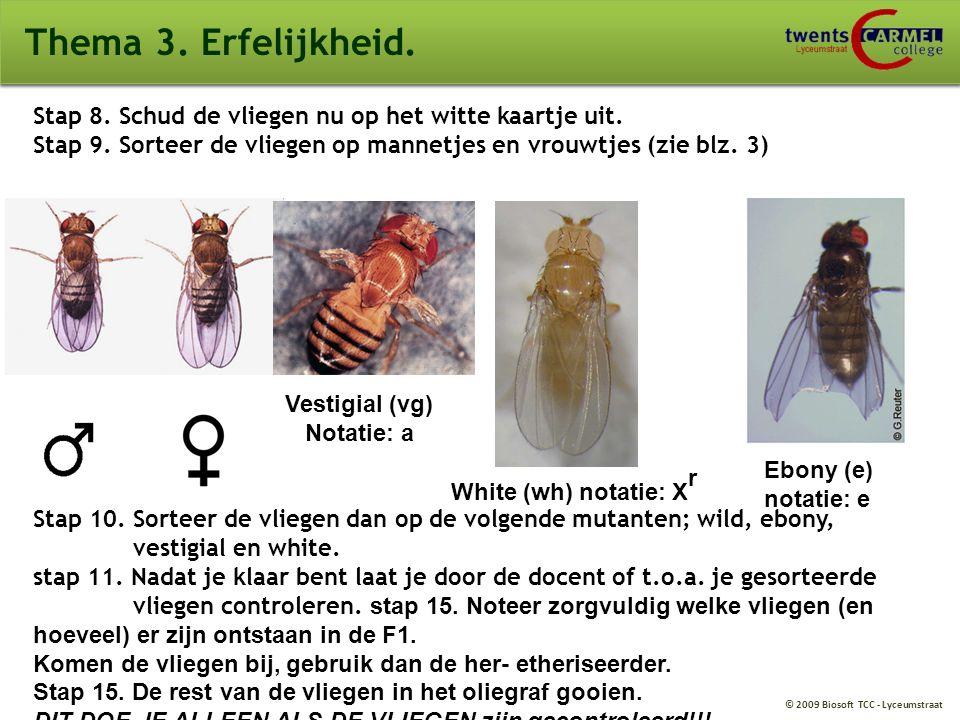 Thema 3. Erfelijkheid. Stap 8. Schud de vliegen nu op het witte kaartje uit. Stap 9. Sorteer de vliegen op mannetjes en vrouwtjes (zie blz. 3)