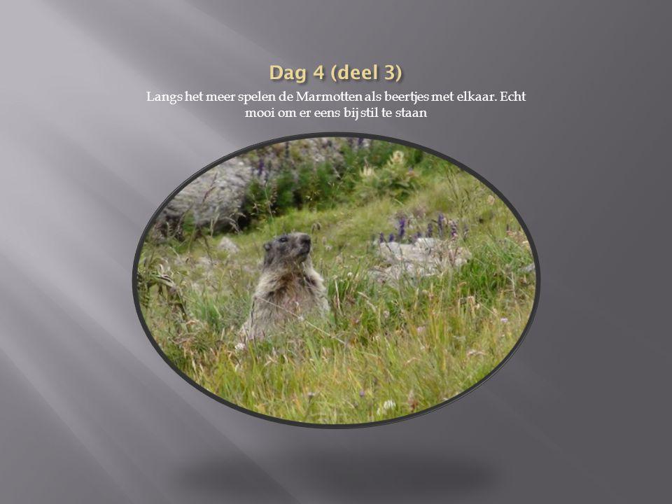 Dag 4 (deel 3) Langs het meer spelen de Marmotten als beertjes met elkaar.