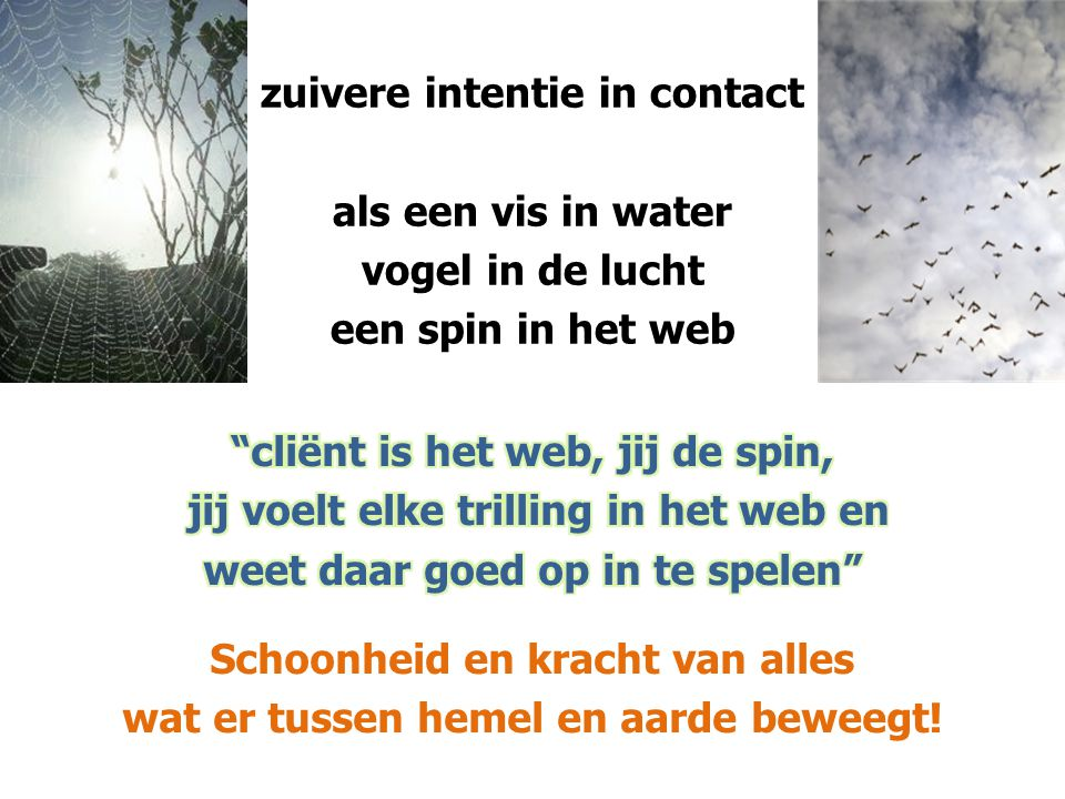 zuivere intentie in contact als een vis in water vogel in de lucht een spin in het web