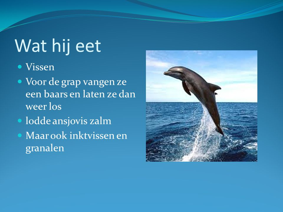 Dolfijnen Ppt Video Online Download