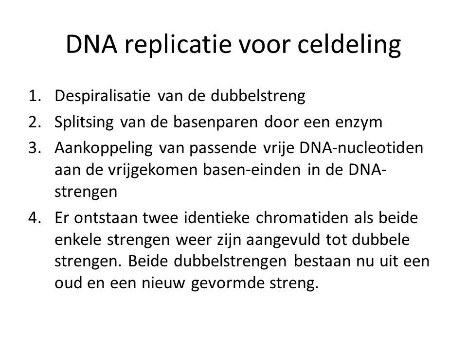 DNA replicatie voor celdeling