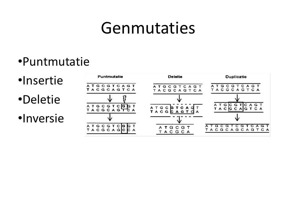 Genmutaties Puntmutatie Insertie Deletie Inversie