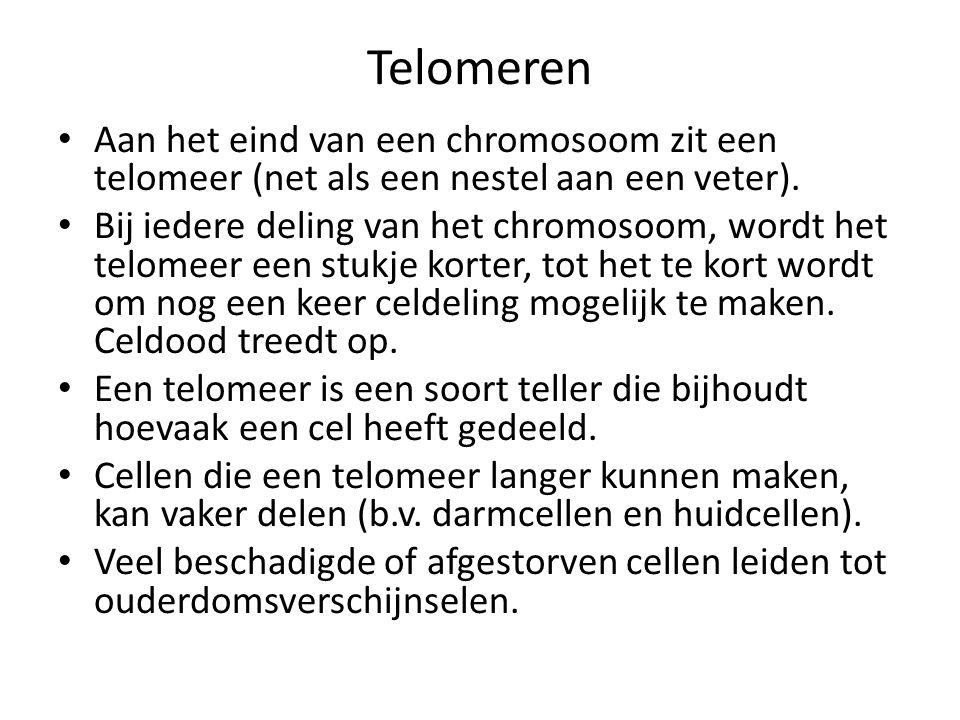 Telomeren Aan het eind van een chromosoom zit een telomeer (net als een nestel aan een veter).