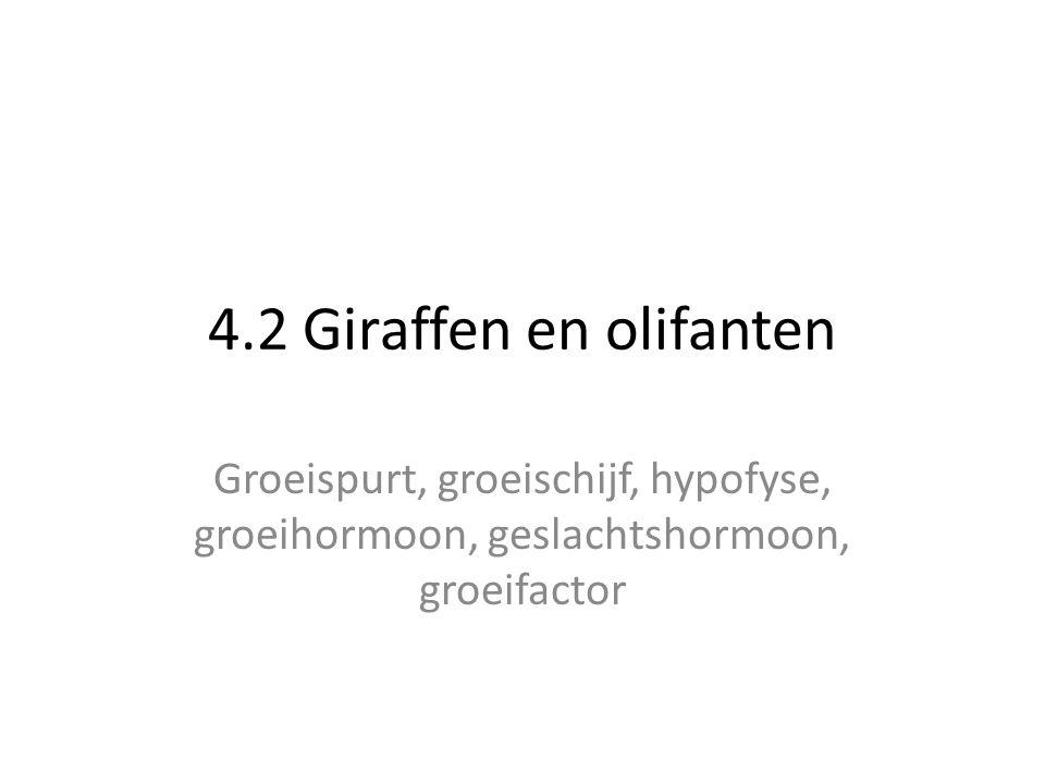 4.2 Giraffen en olifanten Groeispurt, groeischijf, hypofyse, groeihormoon, geslachtshormoon, groeifactor.
