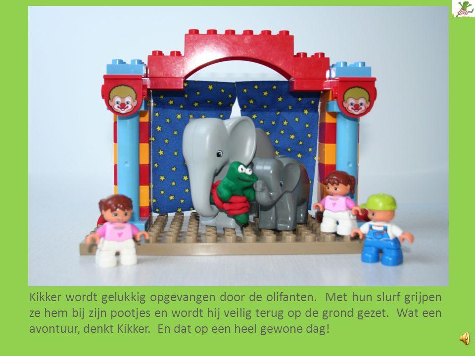Kikker wordt gelukkig opgevangen door de olifanten