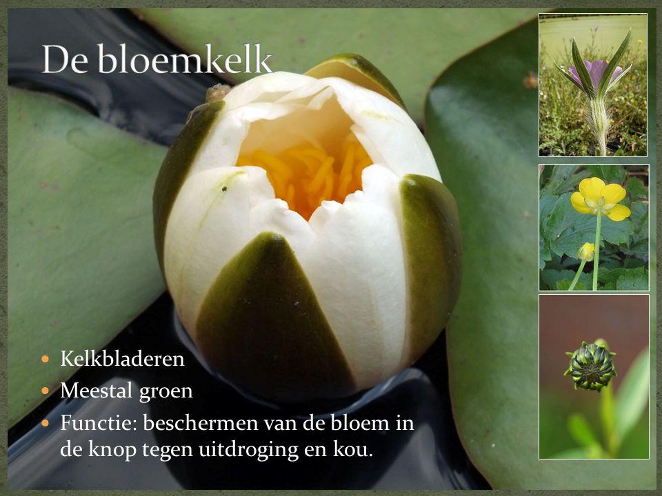 De bloemkelk Kelkbladeren Meestal groen