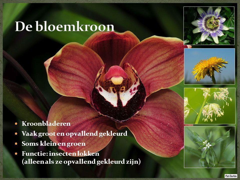 De bloemkroon Kroonbladeren Vaak groot en opvallend gekleurd