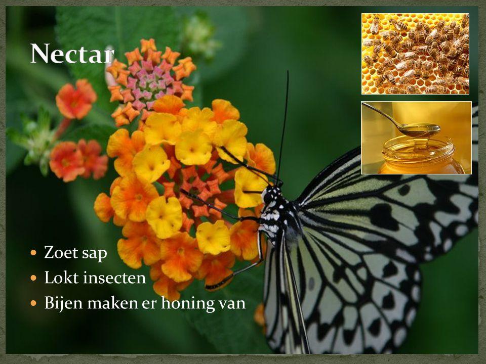 Nectar Zoet sap Lokt insecten Bijen maken er honing van