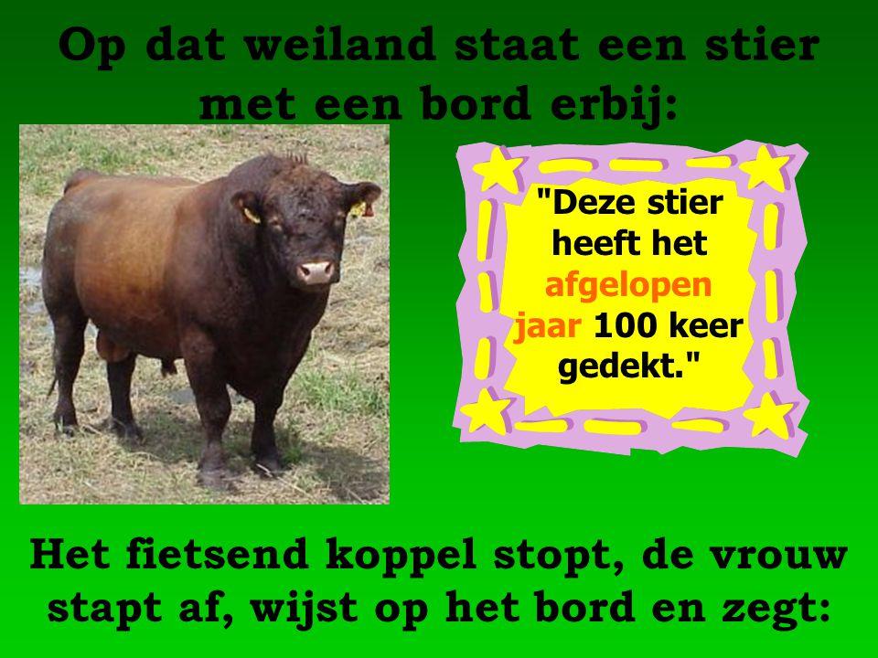 Op dat weiland staat een stier met een bord erbij: