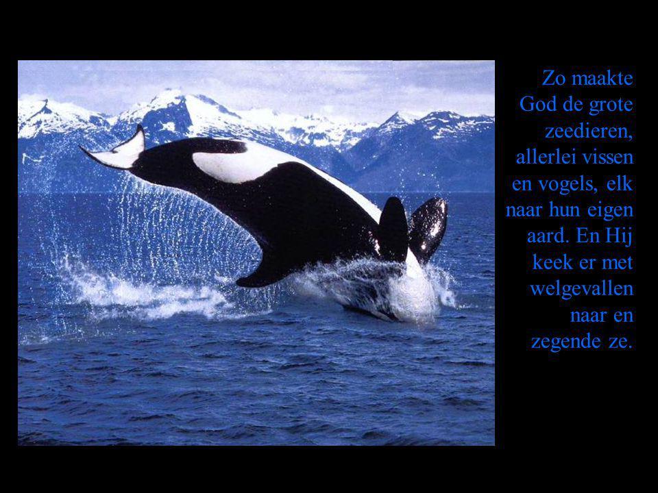 Zo maakte God de grote zeedieren, allerlei vissen en vogels, elk naar hun eigen aard.