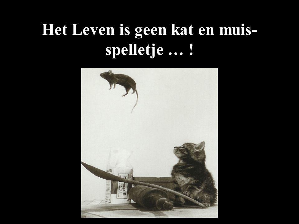 Het Leven is geen kat en muis-spelletje … !