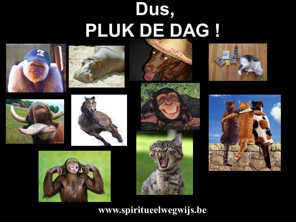 Dus, PLUK DE DAG ! www.spiritueelwegwijs.be