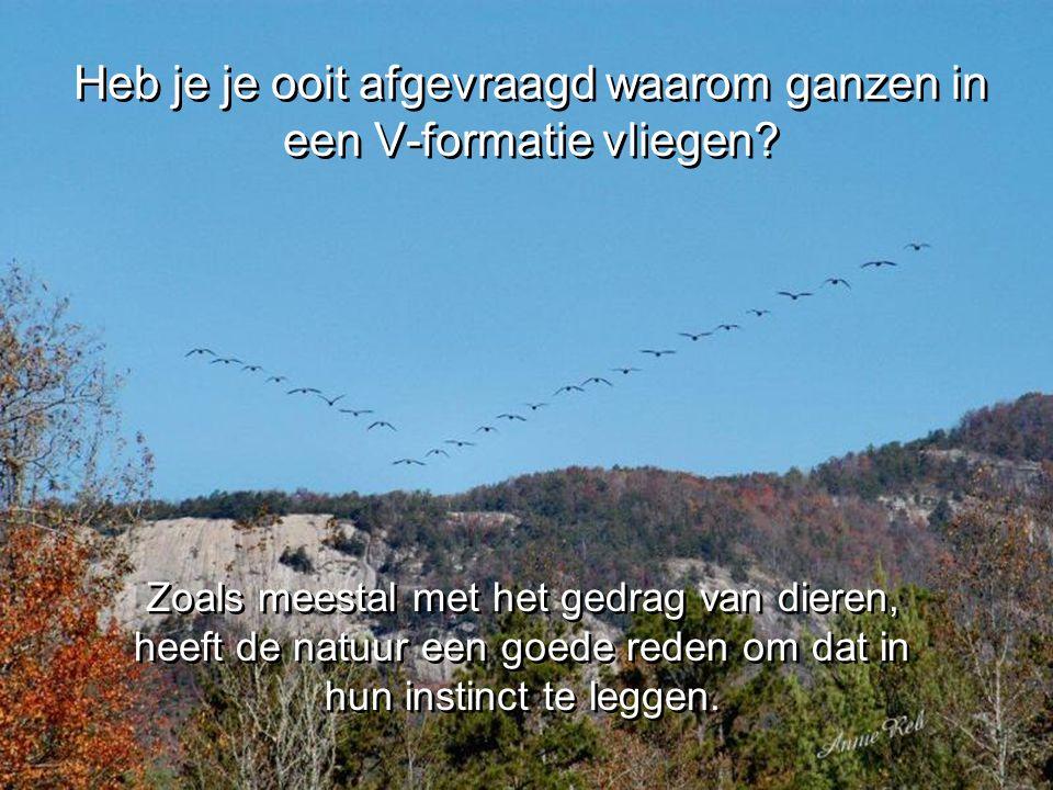 Heb je je ooit afgevraagd waarom ganzen in een V-formatie vliegen