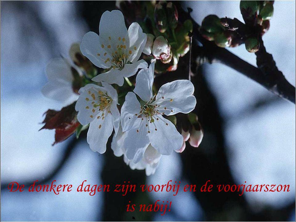De donkere dagen zijn voorbij en de voorjaarszon is nabij!