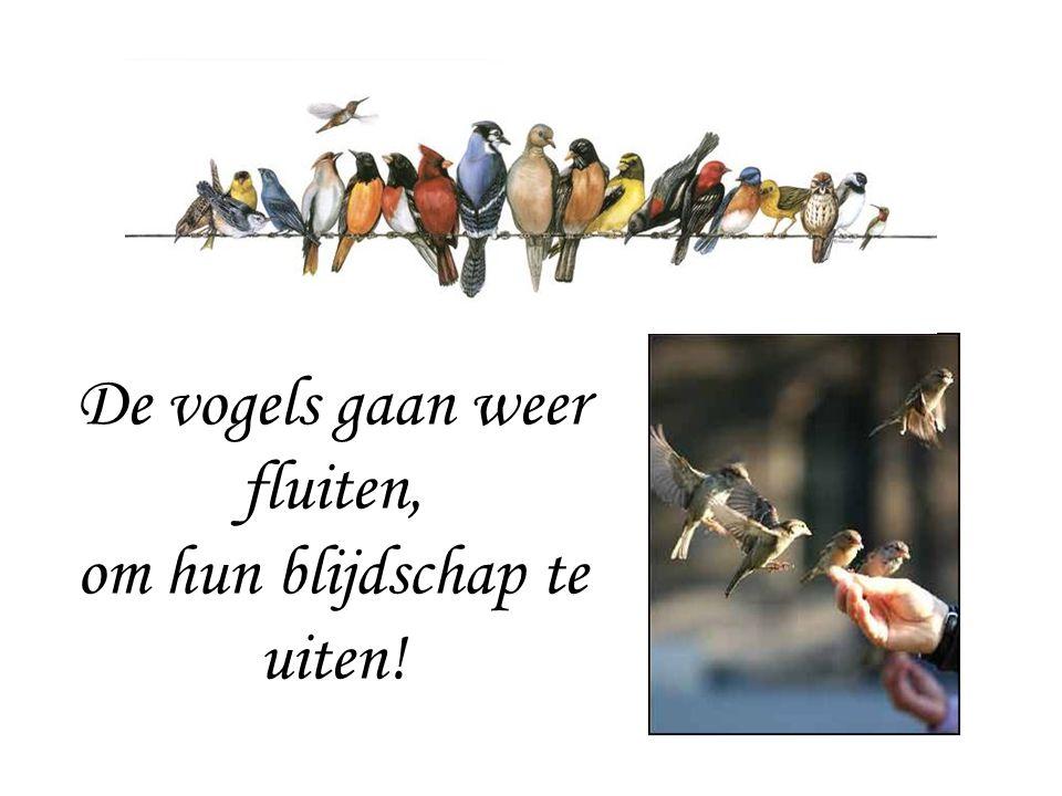 De vogels gaan weer fluiten, om hun blijdschap te uiten!