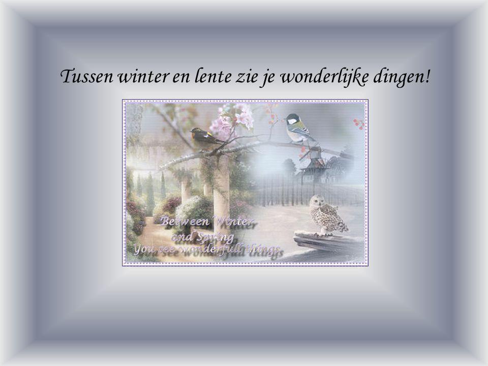 Tussen winter en lente zie je wonderlijke dingen!