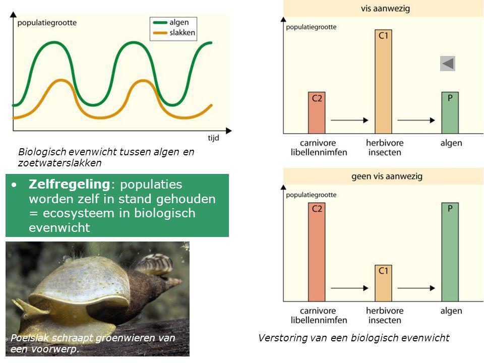 Biologisch evenwicht tussen algen en zoetwaterslakken