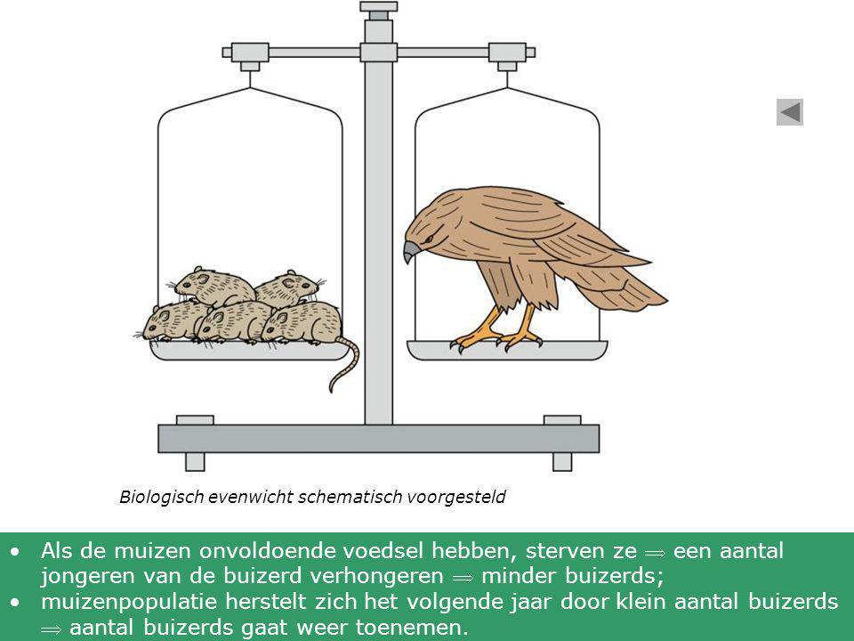Biologisch evenwicht schematisch voorgesteld