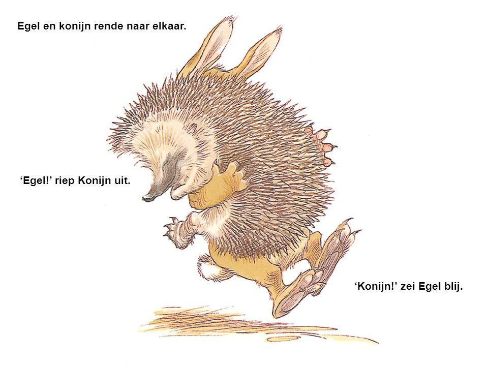 Egel en konijn rende naar elkaar.