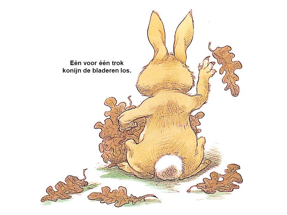 Eén voor één trok konijn de bladeren los.