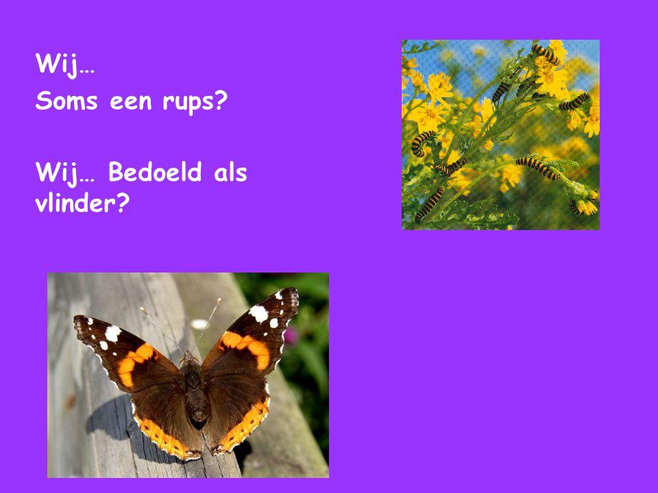 Wij… Soms een rups Wij… Bedoeld als vlinder