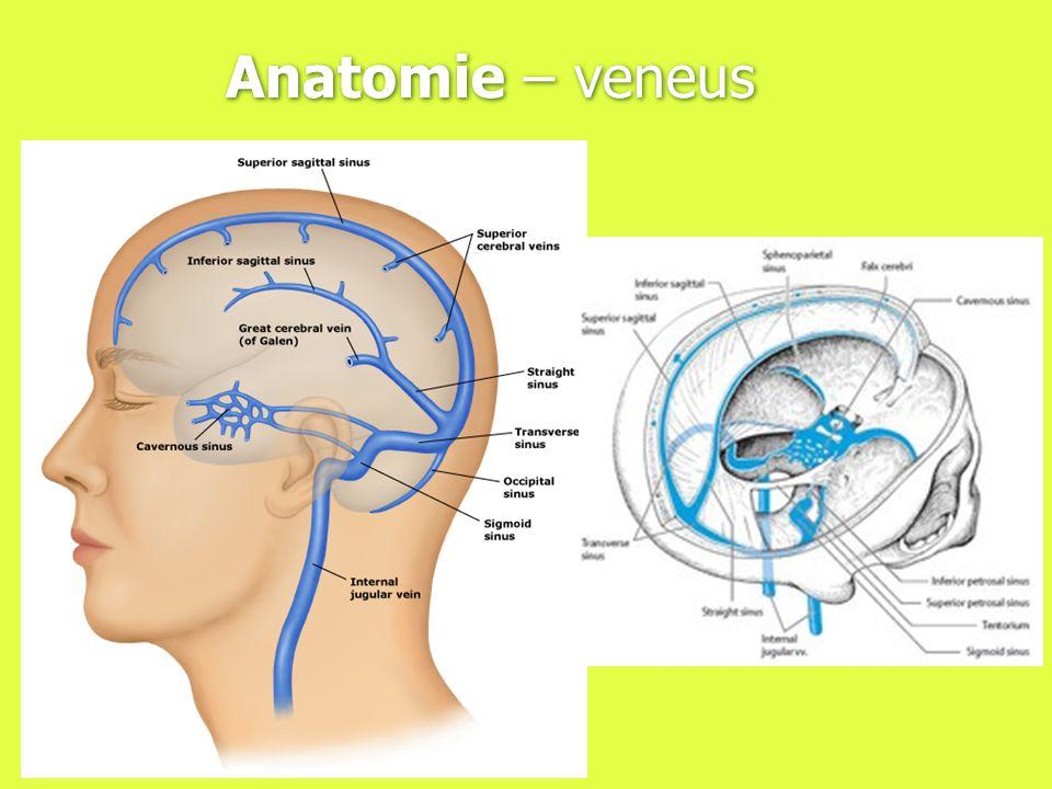 Anatomie – veneus