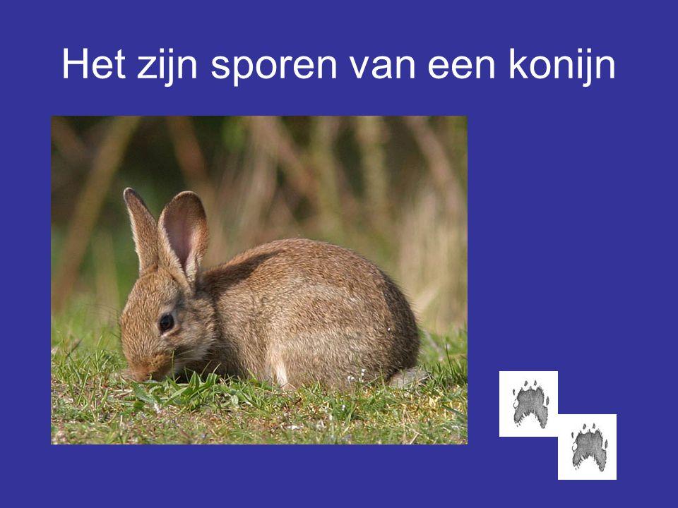 Het zijn sporen van een konijn