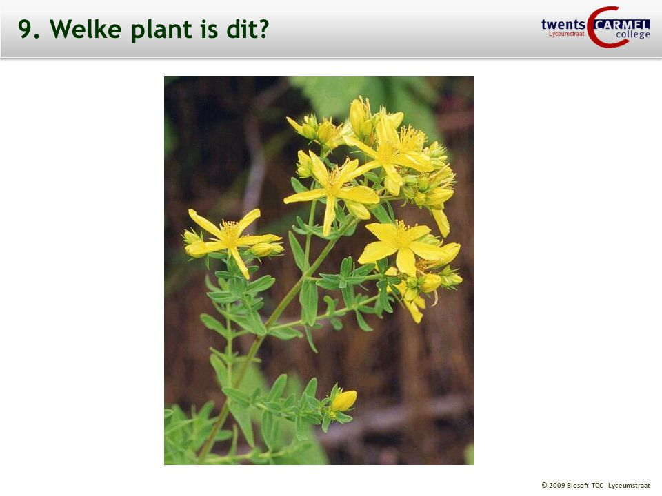 9. Welke plant is dit