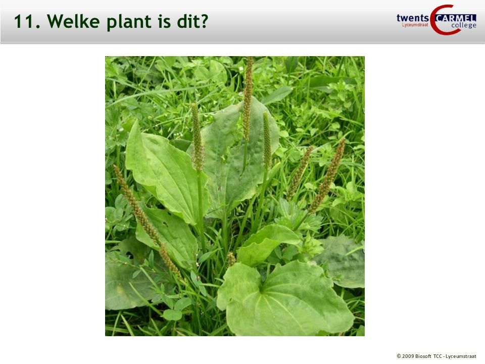11. Welke plant is dit