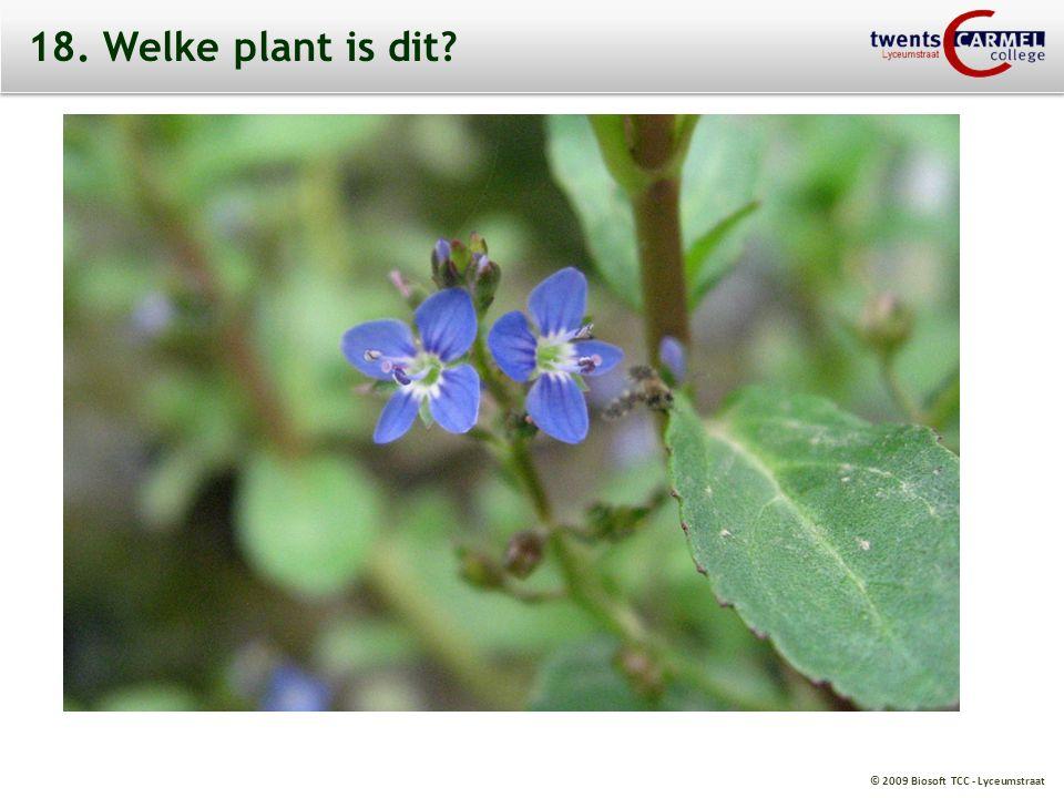 18. Welke plant is dit