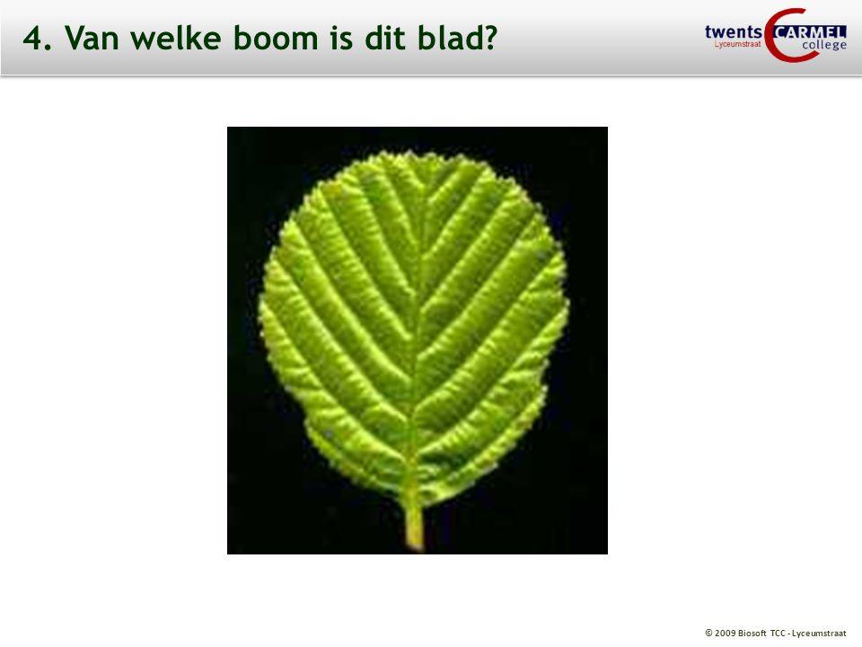 4. Van welke boom is dit blad