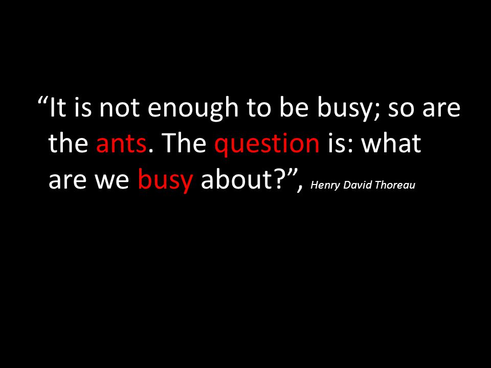 It is not enough to be busy; so are the ants