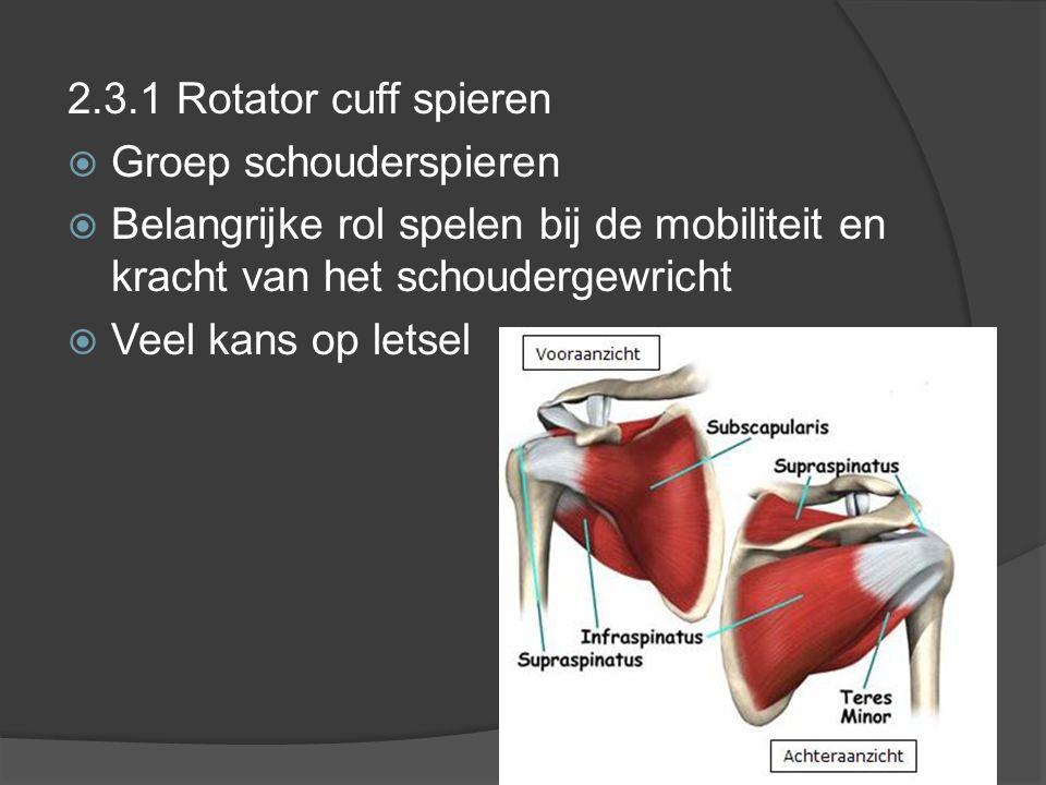 2.3.1 Rotator cuff spieren Groep schouderspieren. Belangrijke rol spelen bij de mobiliteit en kracht van het schoudergewricht.