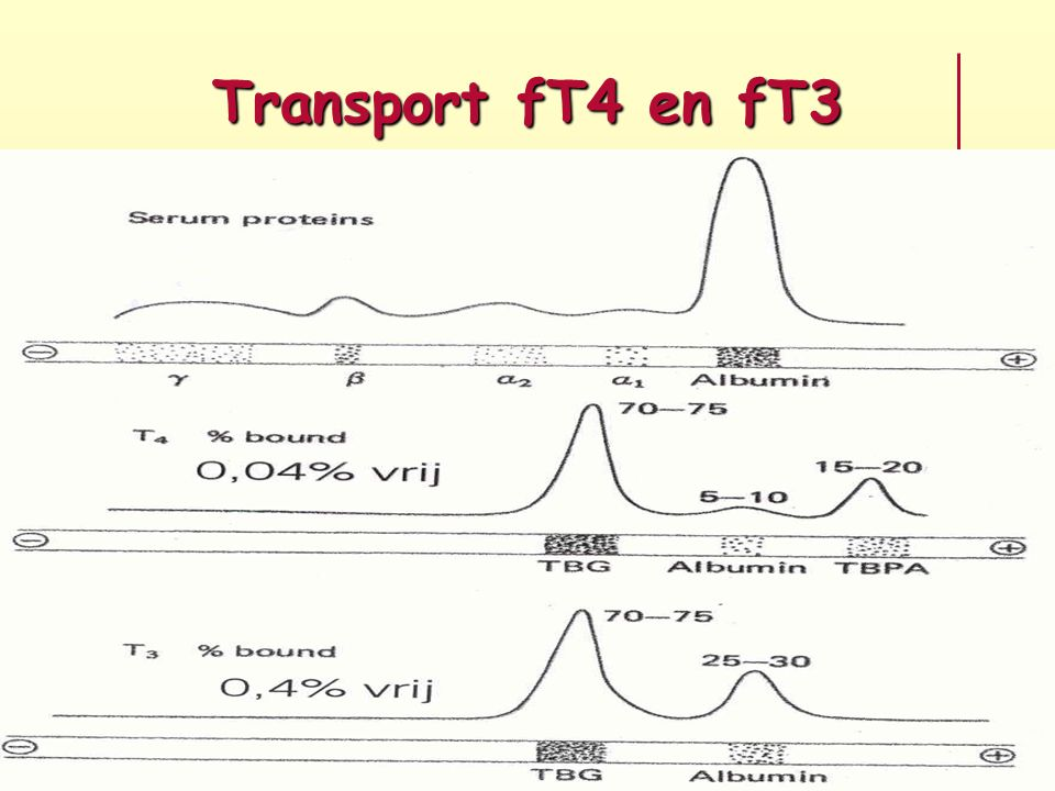 Transport fT4 en fT3