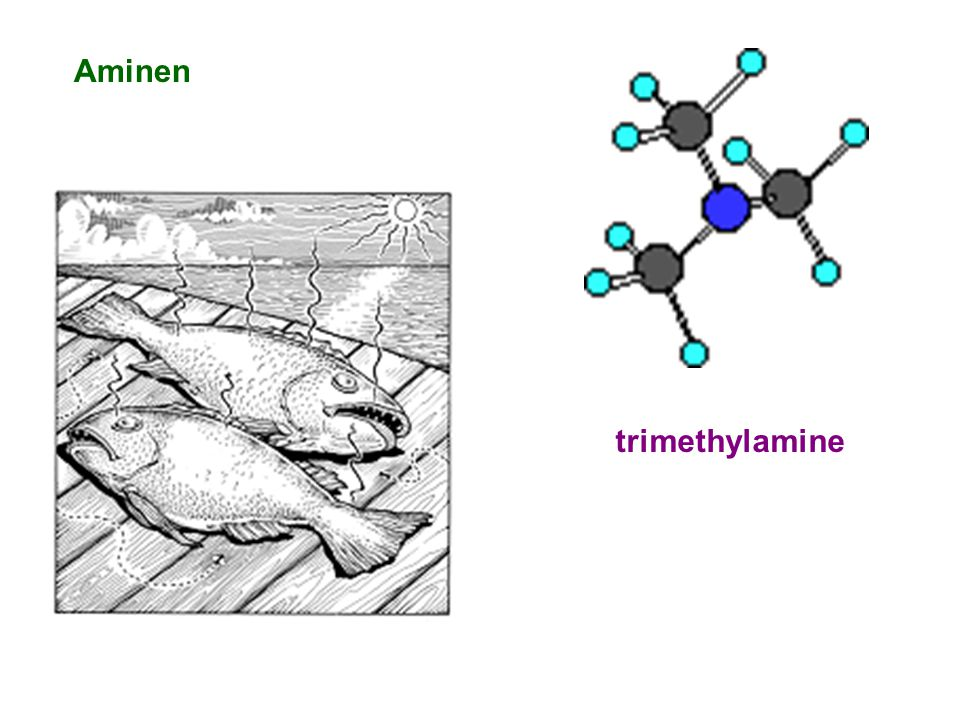 Aminen trimethylamine